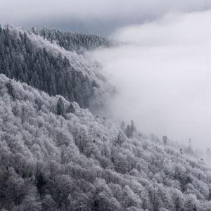 Iarna, un pictor desăvârșit