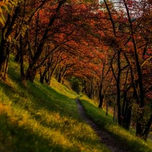 Pădurea din poveste