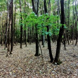 Bacau area forests