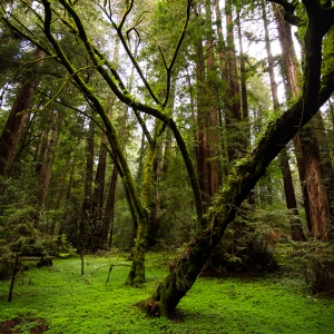 Muir Woods National Monument, California, US