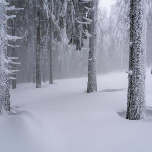 Pădure de argint