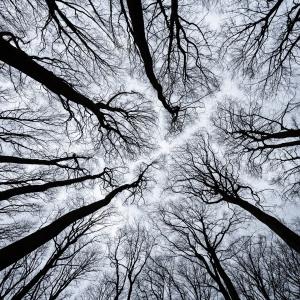 Parcul National Jasmund, Germania