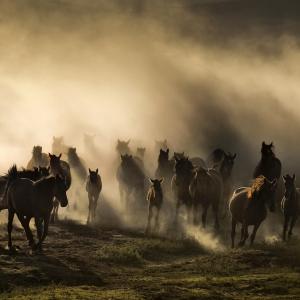 Cappadocia -tara cailor frumosi