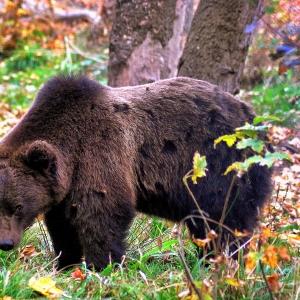 Martinică ursulică!