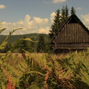 cabana in munti