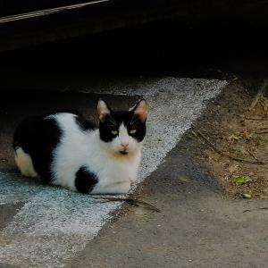 Pisica la umbră