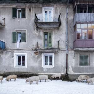 Orasul porcilor